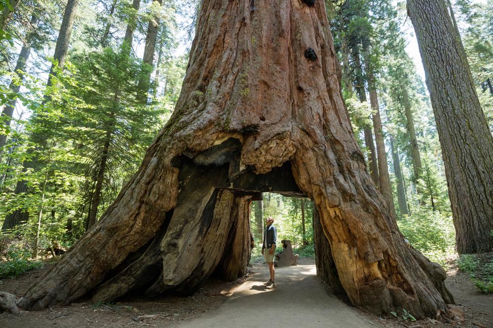 A Guide To Redwood National Park Rvshare Com