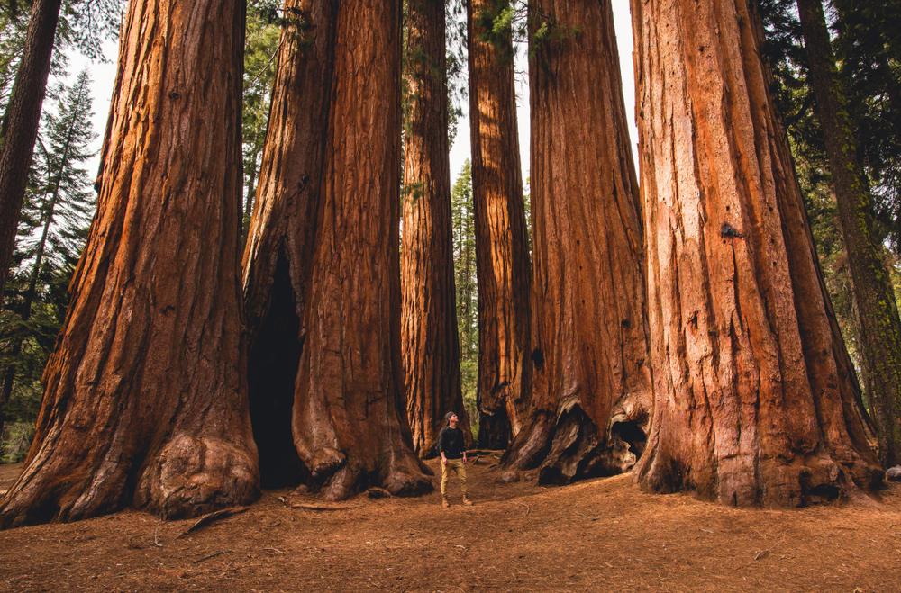 A Guide to Sequoia National Park   RVshare com